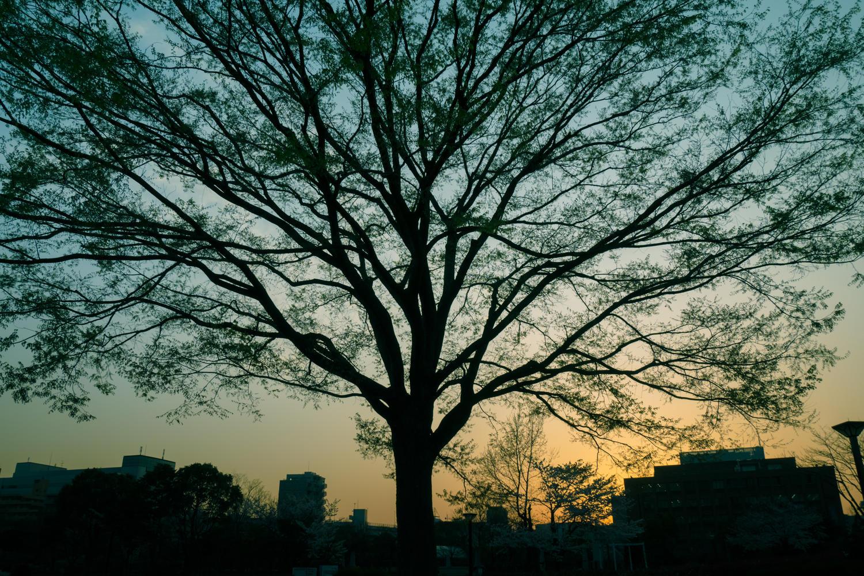 KAZ863_yuyakenogurade_TP_V